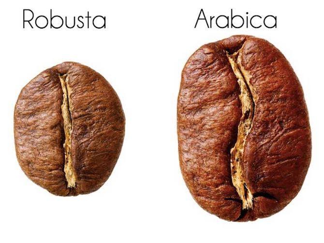 фото кофейных зерен арабики и робусты