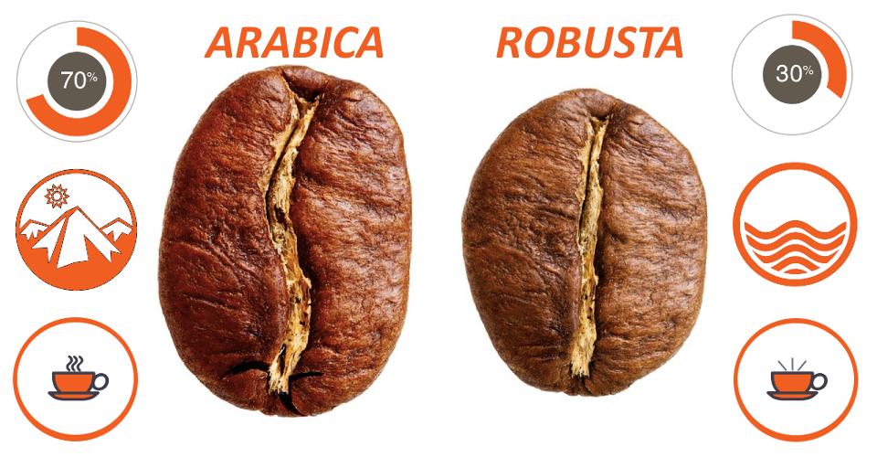 фото отличий между арабикой и робустой