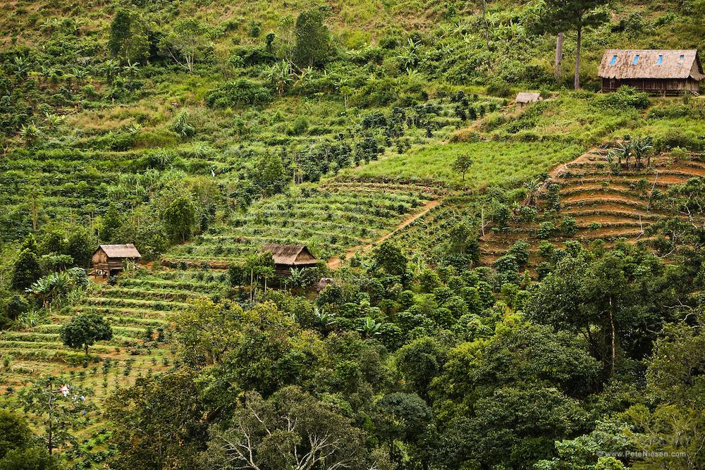 фото кофейной плантации во Вьетнаме