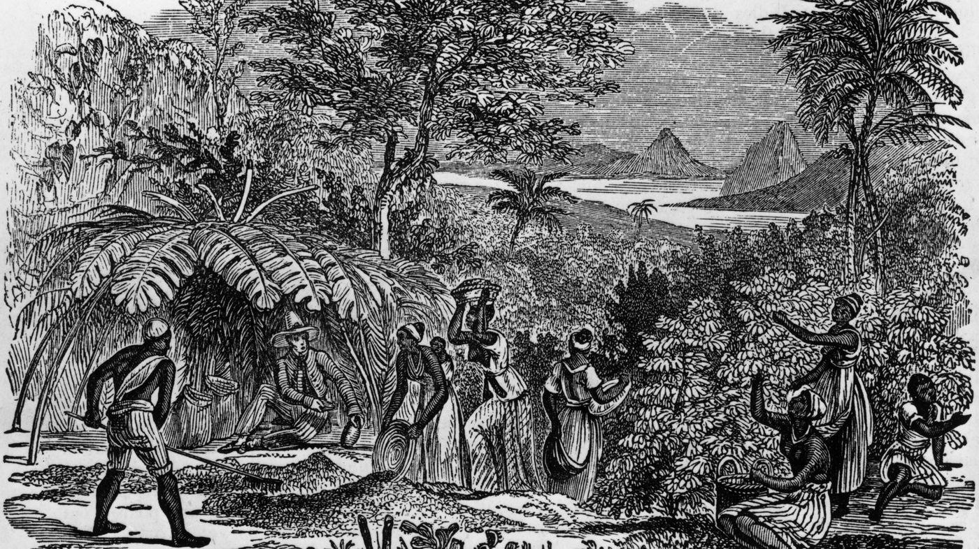 фото рабов на кофейной плантации
