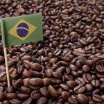 фото зерен бразильского кофе