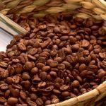 фото зерен кофе сорта эксцельза