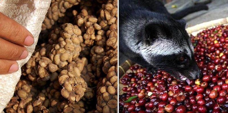 фото индонезийского кофе копи лювак