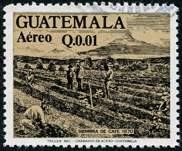 история кофе в Гватемале
