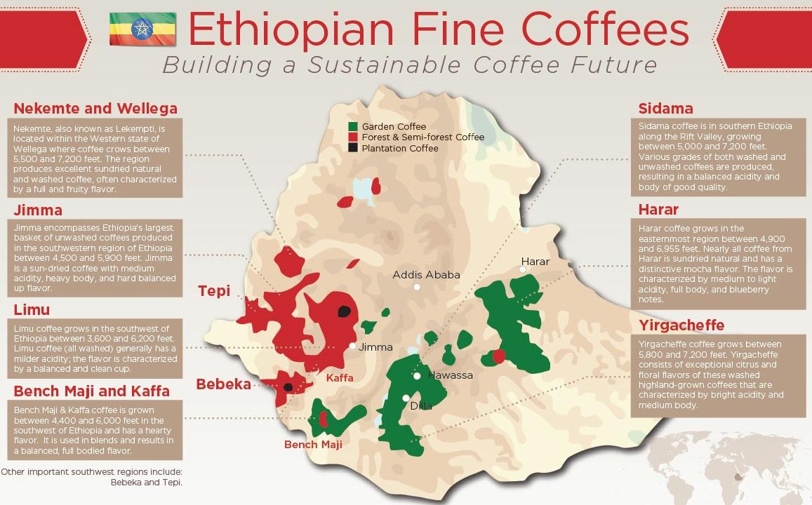 карта регионов производства кофе в Эфиопии