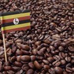 какой кофе производит Уганда