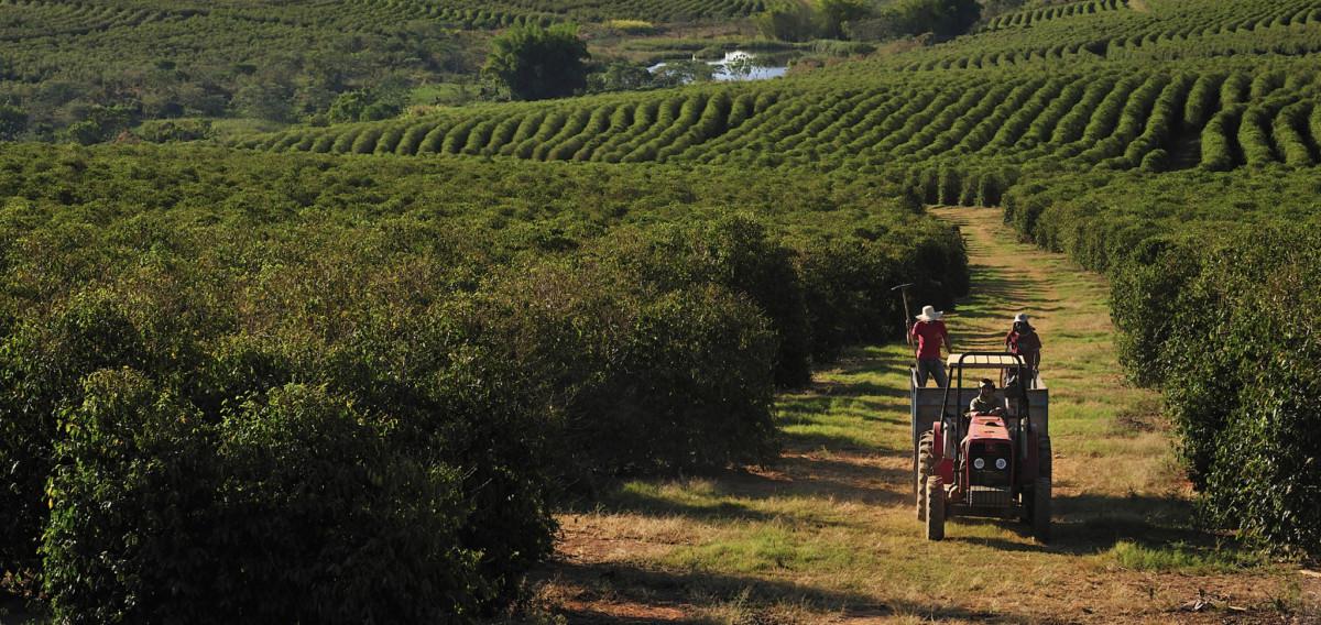 фото кофейной плантации в Эфиопии