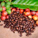 фото кофейных зерен и ягод