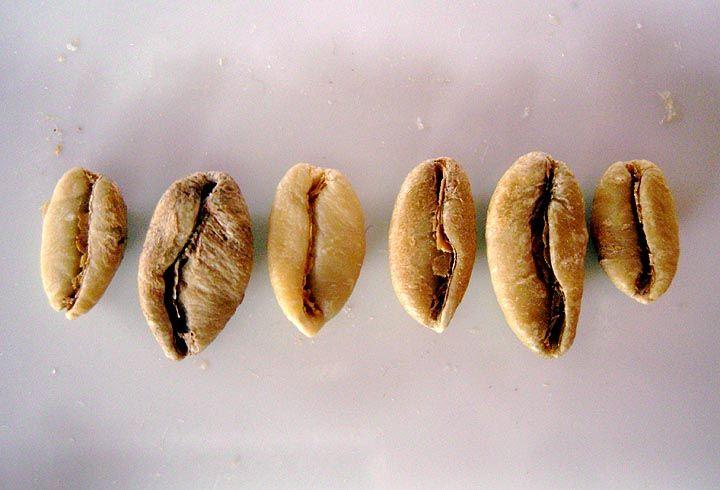 фото не обжаренных зерен кофе либерика