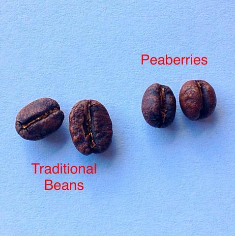 фото обычного кофейного зерна и пиберри