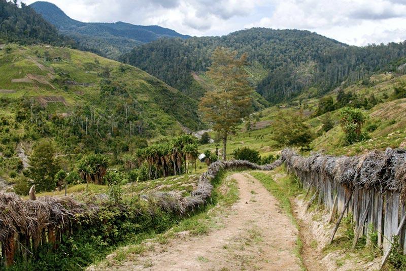 фото платнации кофе в Папуа - Новая Гвинея