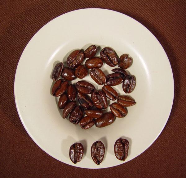фото сорта кофе либерика