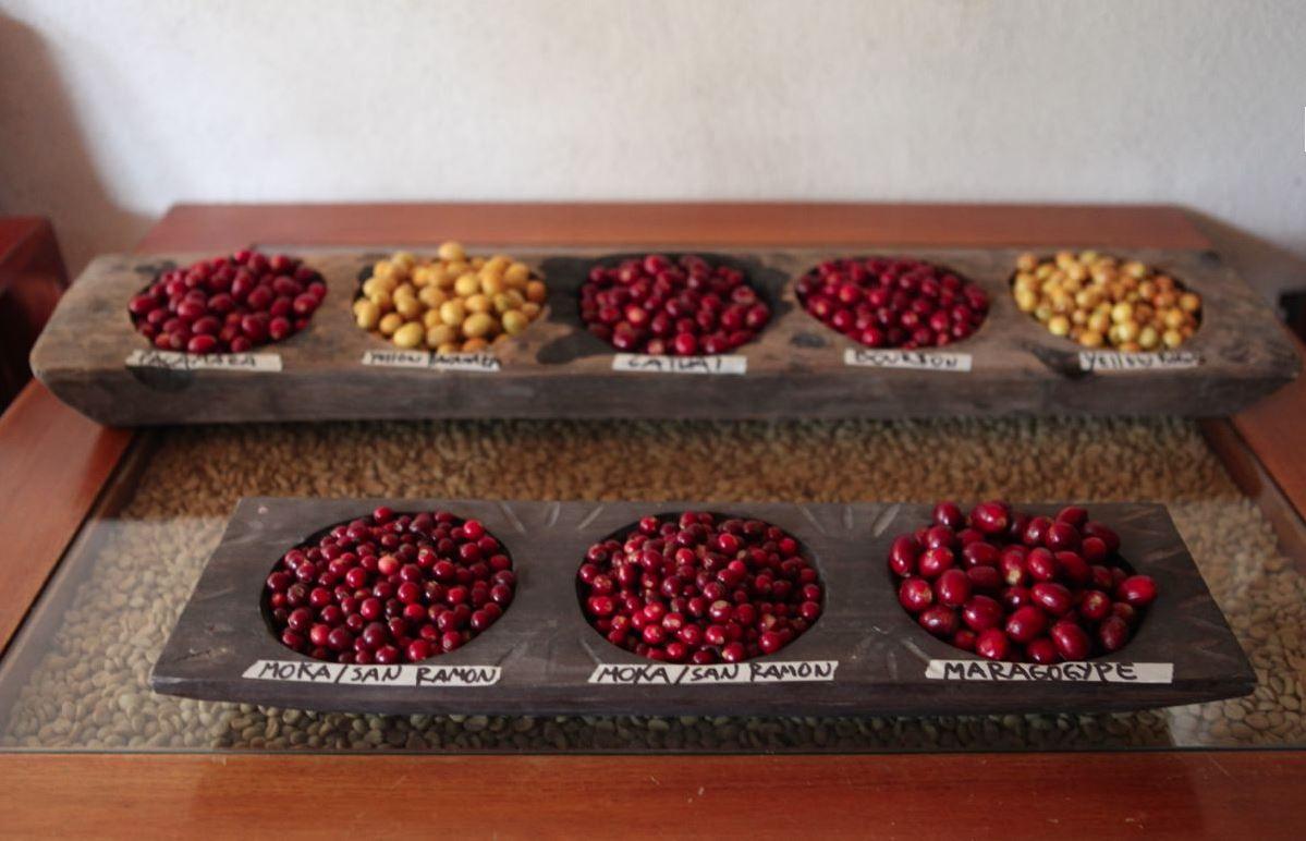 фото сортов гватемальского кофе