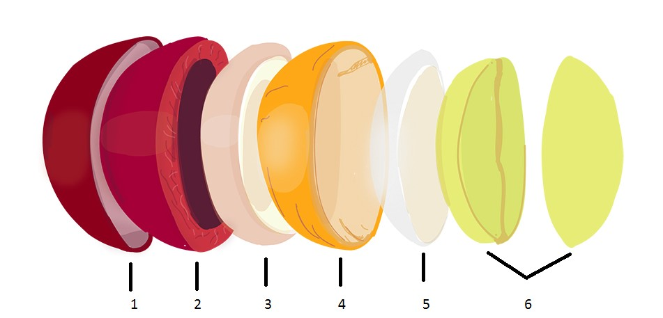фото структуры кофейного зерна