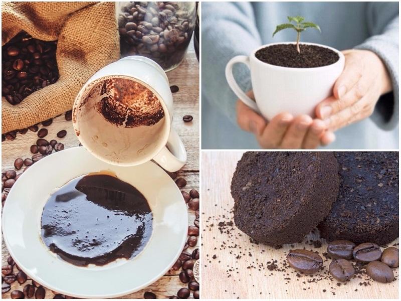 фото как правильно использовать кофейный жмых для удобрения растений