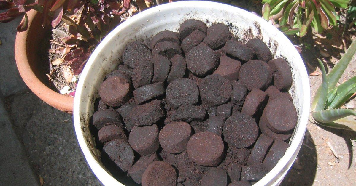 фото кофейного жмыха как удобрения