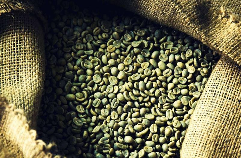 фото зерен зеленого кофе