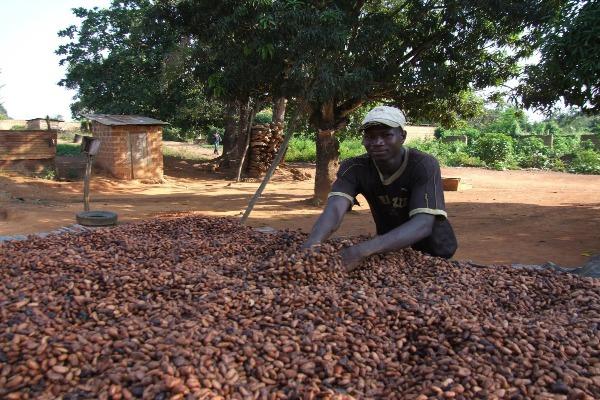 какими методами обрабатывают кофе в Кот д'Ивуаре