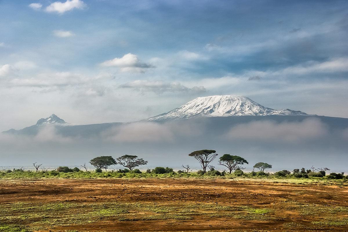 фото плантации кофе в Танзании