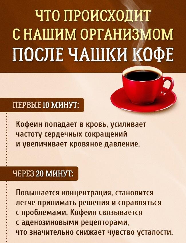 как кофеин влияет на сосуды головного мозга
