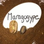 фото кофе марагонджип