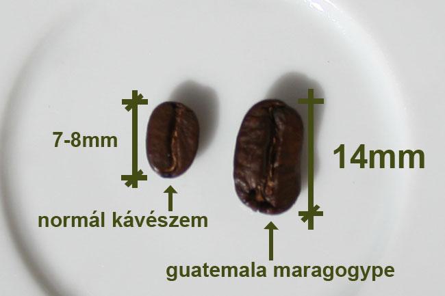 фото зерна кофе марагонджип