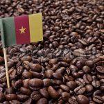 какой кофе в Камеруне