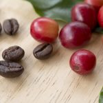 фото кофейной ягоды (вишни)