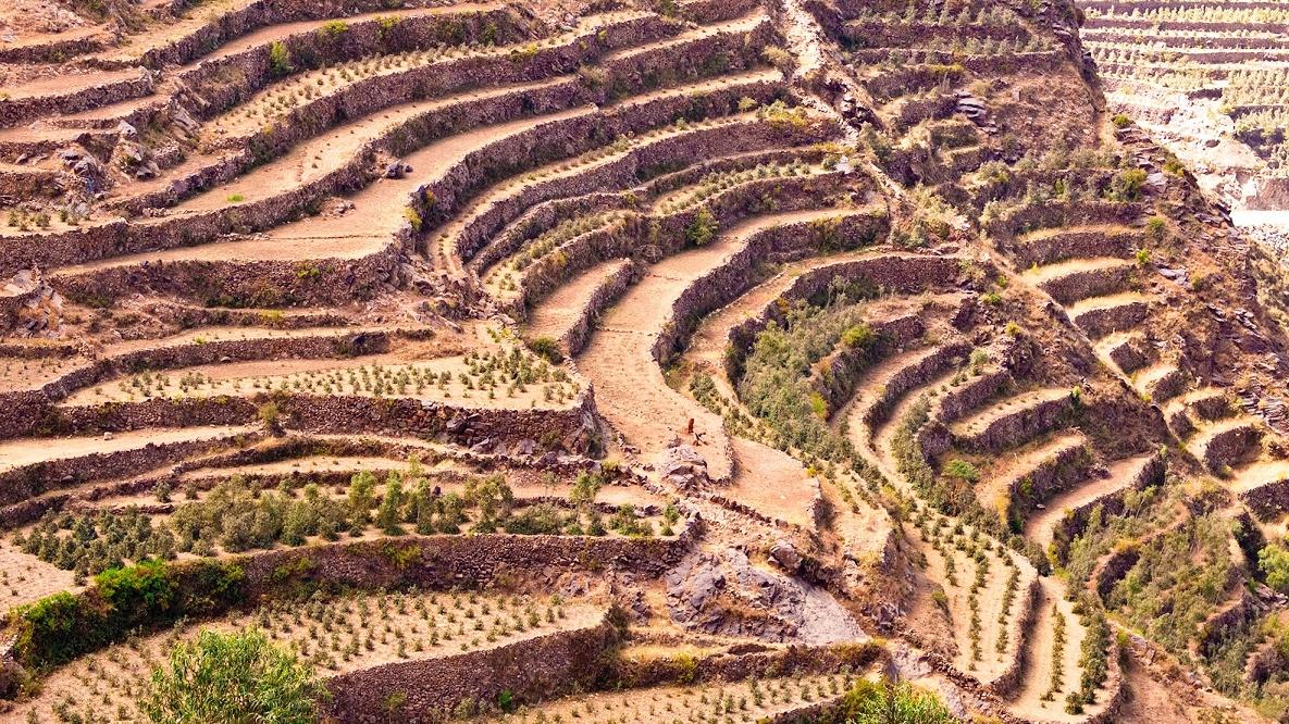фото плантации кофе в Йемене