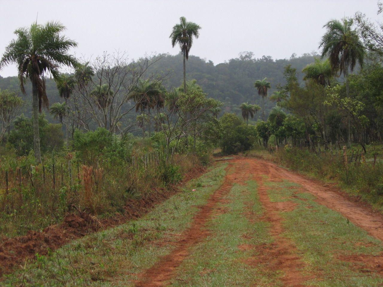 фото плантации кофе в Парагвае