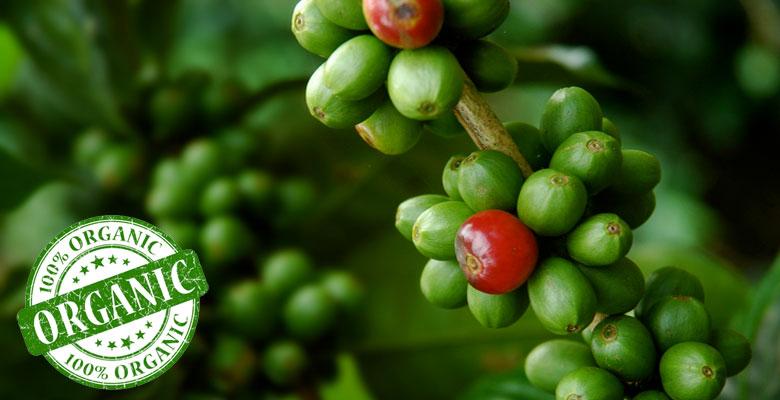 как выращивают органический кофе