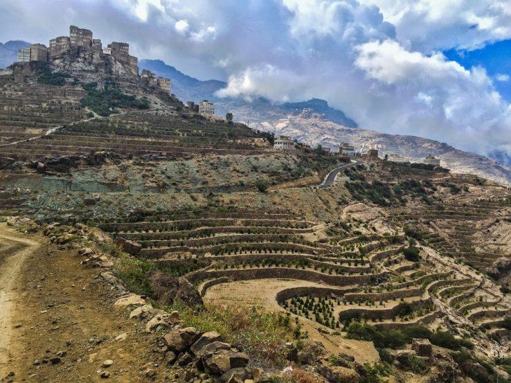 фото плантации кофе Мокка в Йемене