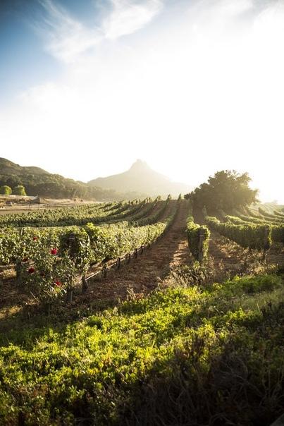 фото плантации кофе в Гвиане