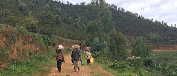 фото плантации кофе в Руанде