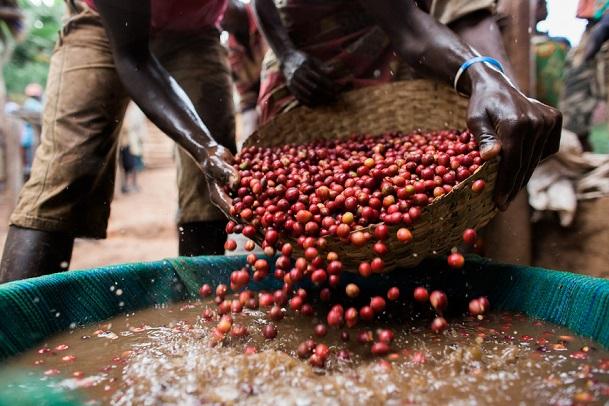 фото как делают кофе в Бурунди