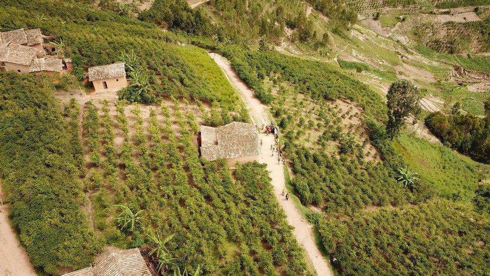 фото плантации кофе в Бурунди