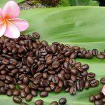 фото гавайского кофе