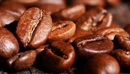 фото кофе арабика джембер
